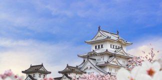 Lâu đài Himeji bên hoa anh đào