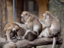 Taipei Zoo - Vườn thú ở Đài Bắc
